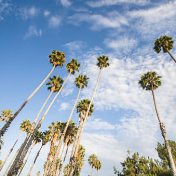 Here's why Los Angeles wants to replace its iconic palm trees with something more practical