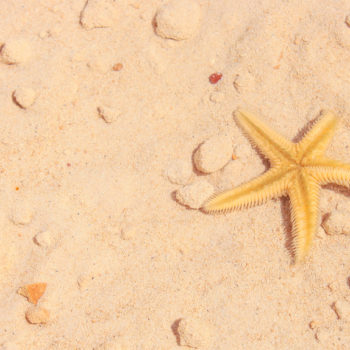 The internet cannot handle this video of a starfish walking, and same