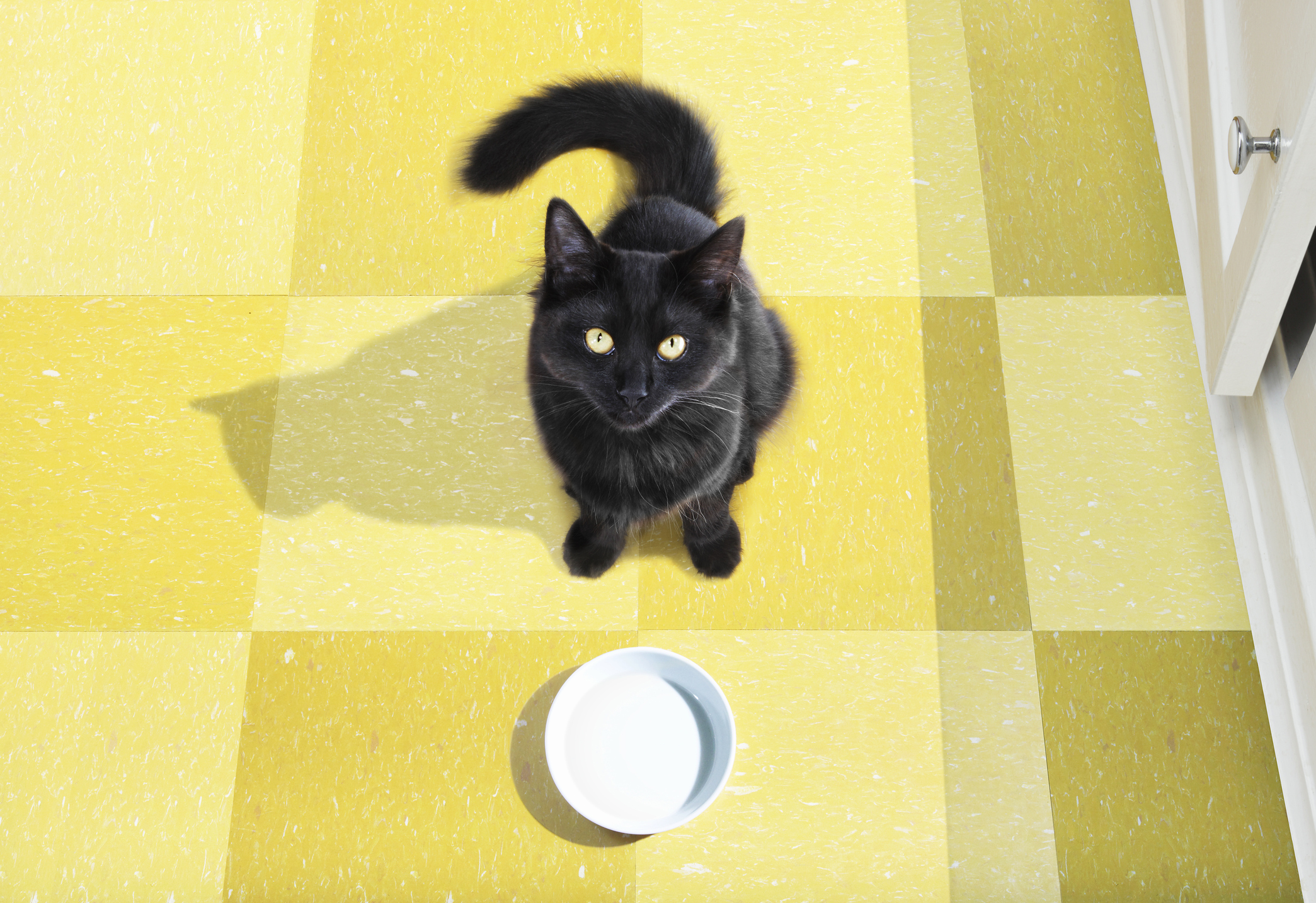 13 adorable black cat GIFs, in honor of Friday the 13th
