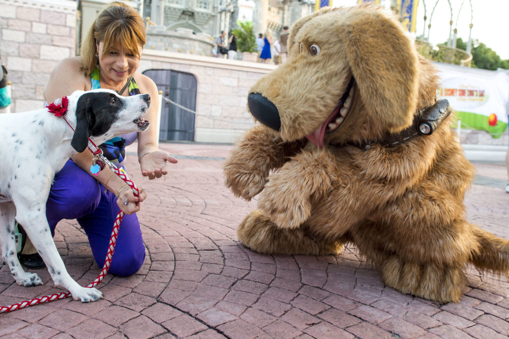 Good dogs can now stay at select Disney World hotels, and it's time to book a vacation with your four-legged best friend