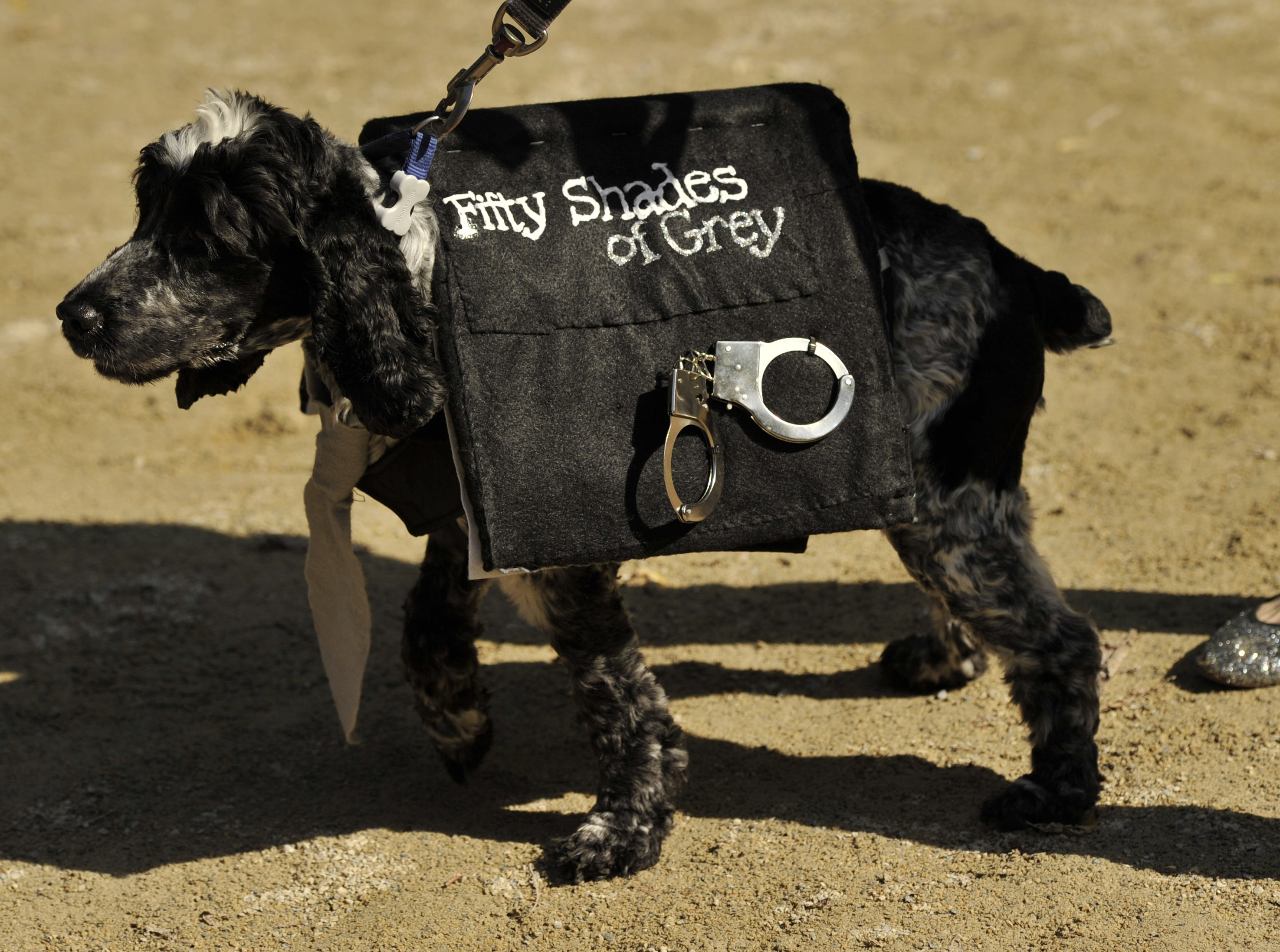 21 clever dog Halloween costumes from NYC's Halloween Dog Parade ...