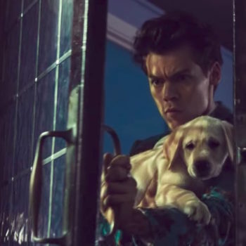 "Don't worry about the puppies in Harry Styles' ""Kiwi"" video — those were all dog cupcakes, and none of them had chocolate"