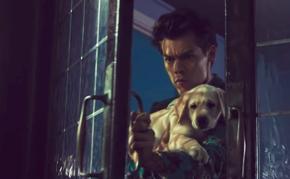 Don U0026 39 T Worry About The Puppies In Harry Styles U0026 39   U0026quot Kiwi