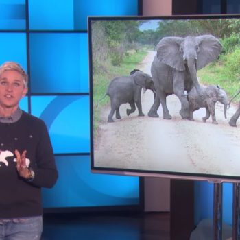 Ellen will donate money for every person who tweets #BeKindToElephants