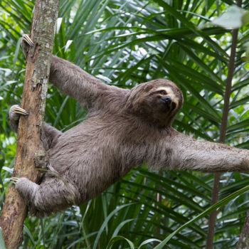Now you can have a sleepover with a sloth, and sign us up