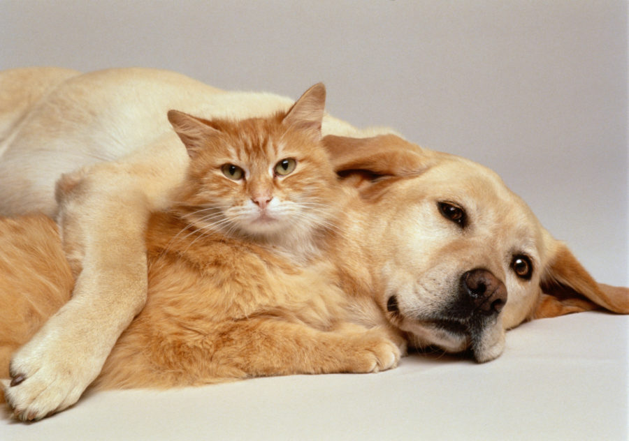 Scientists believe that dogs may be twice as smart as cats