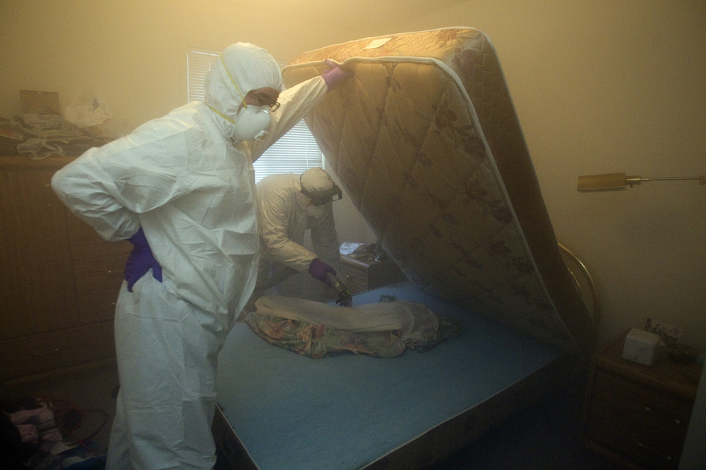 How Do Bed Bugs Travel Through Apartments
