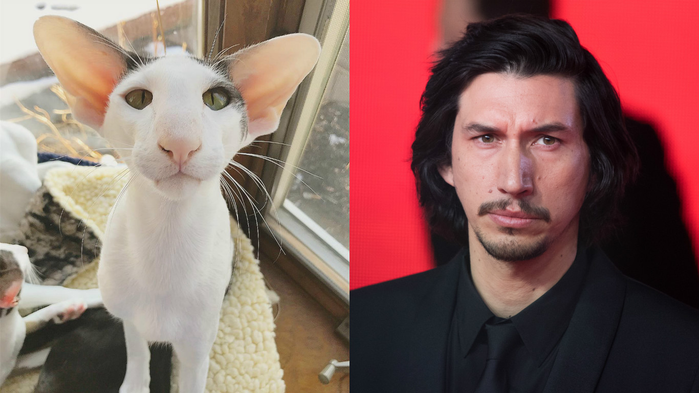 There's another lookalike Adam Driver cat, because someone is breeding Kylo Ren kittens