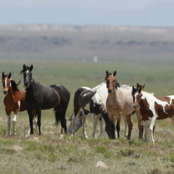 Congress may make it okay to eat wild horses today, and we have questions
