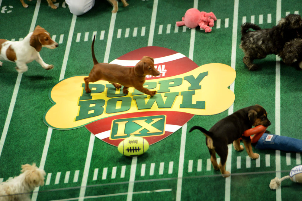 "Animal Planet is doing ""Puppy Bowl"" and ""Dog Bowl"" this year, and really, who needs football?"