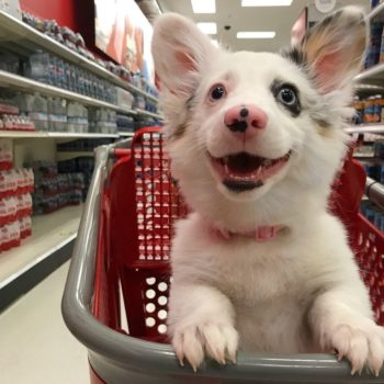 This adorable puppy is living its best life at Target