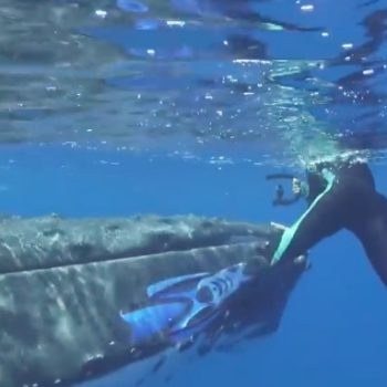 A whale saved a diver from a shark, and the whole thing was caught on video