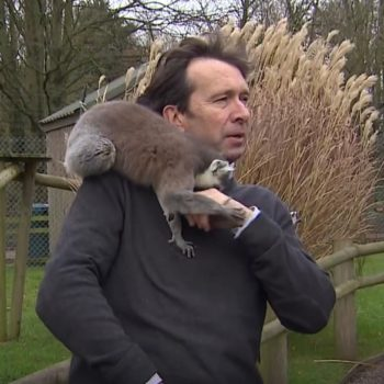This BBC reporter was literally mobbed by lemurs during a news segment