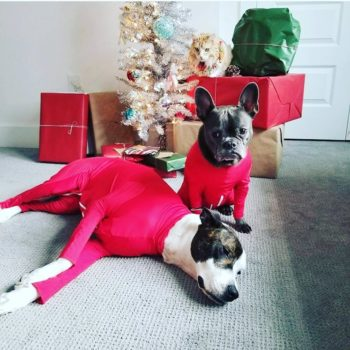 There is a very good reason these dogs are wearing leotards — trust us