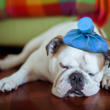 The dog flu is hitting pets hard this year, and here's what you need to know about it
