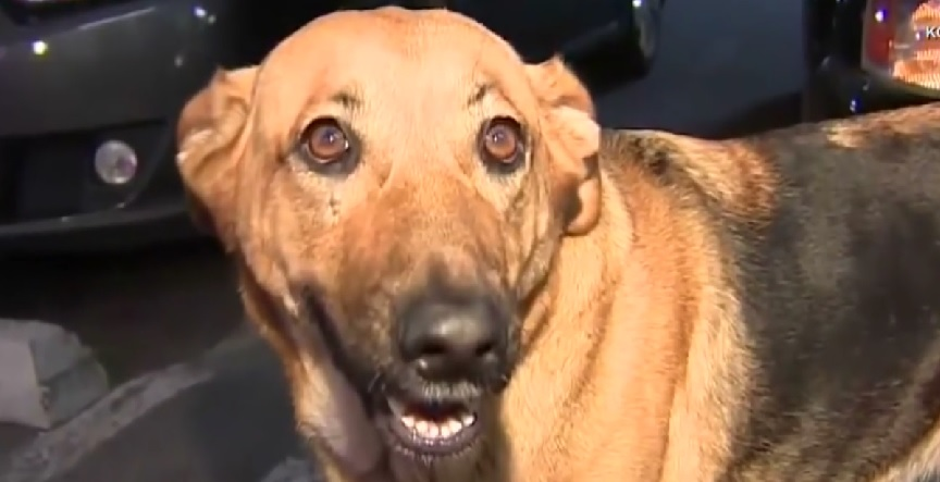 Man reunites with dog after his car was stolen while she was still inside it