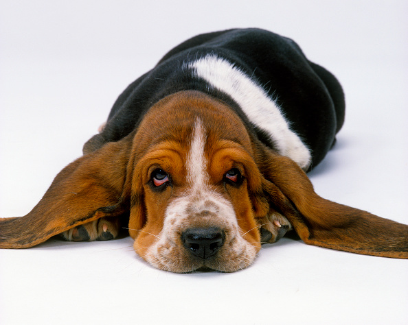 What are the symptoms of dog flu, and should you be worried?