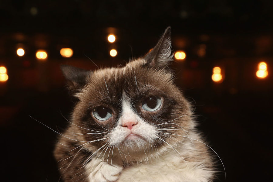 Grumpy Cat just won a $710,000 lawsuit over her line of Grumppuccino iced coffee