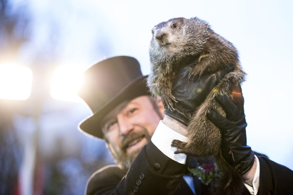 Why is Punxsutawney Phil THE groundhog on Groundhog Day? We looked into it