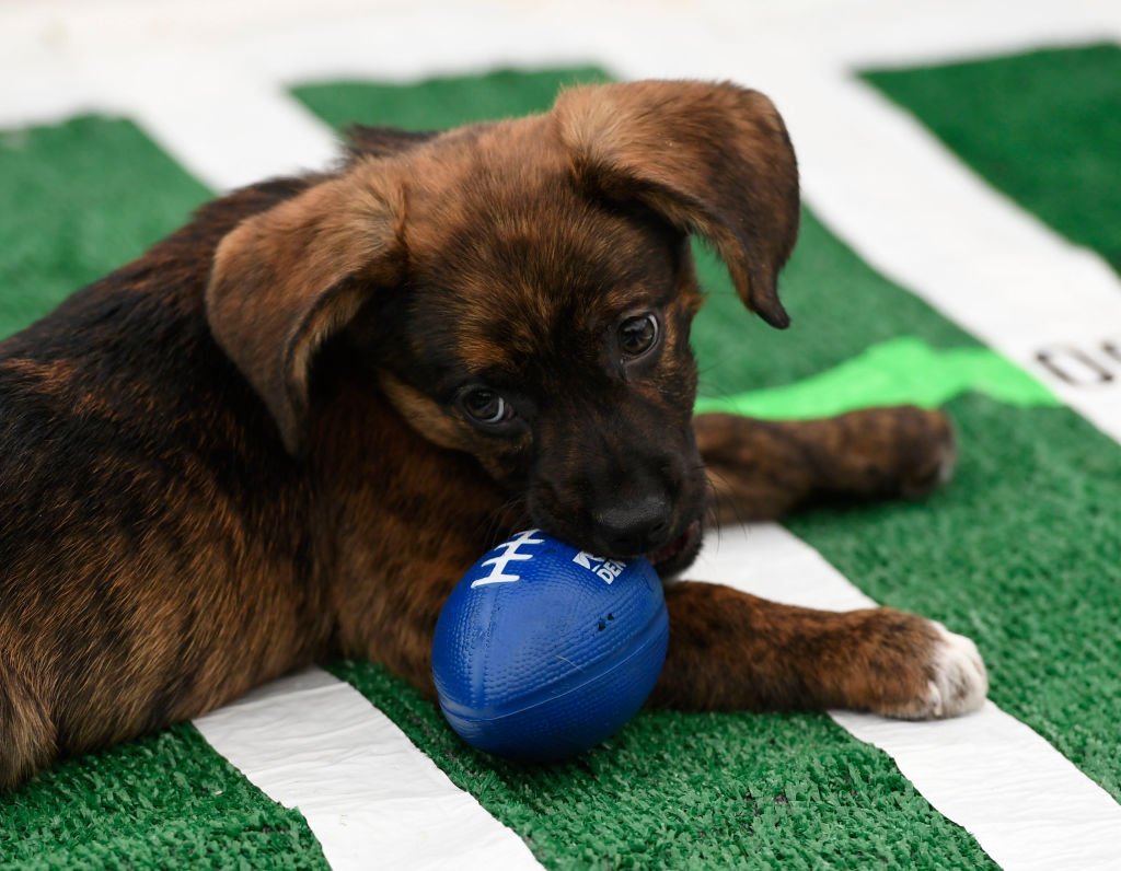 Here's how to watch the Puppy Bowl, because that's what Super Bowl Sunday is REALLY all about