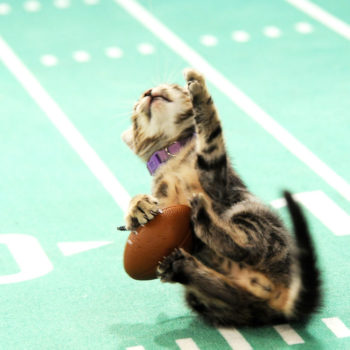 Here's how to watch the Kitten Bowl, because why should puppies have all the fun?