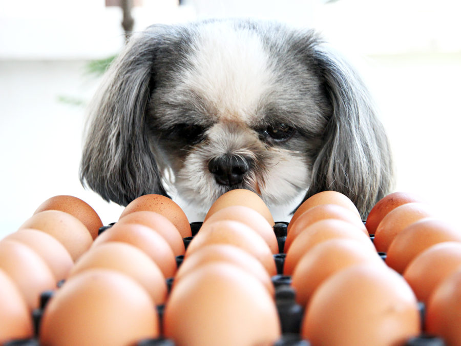 A viral egg challenge proves dogs can be human's gentlest friend