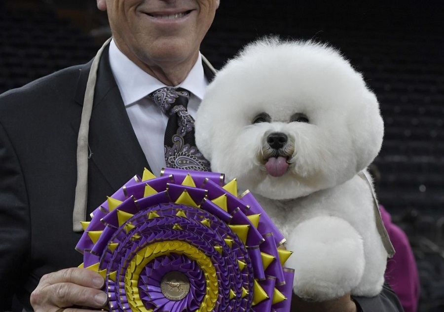 A dog named Flynn just won Best in Show at the Westminster Dog Show, and OMG THE PICTURES