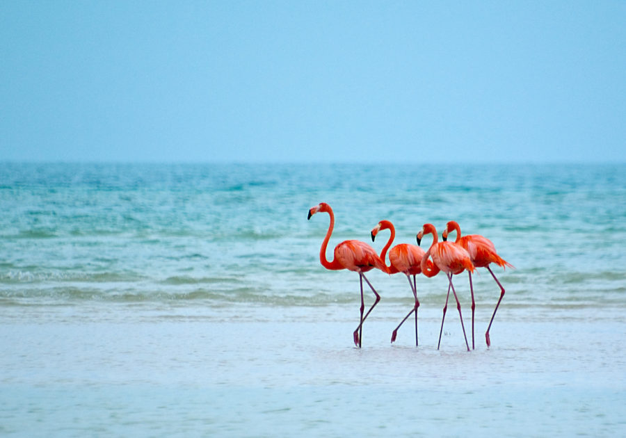 A resort in the Bahamas is hiring a Chief Flamingo Officer, because dream jobs exist