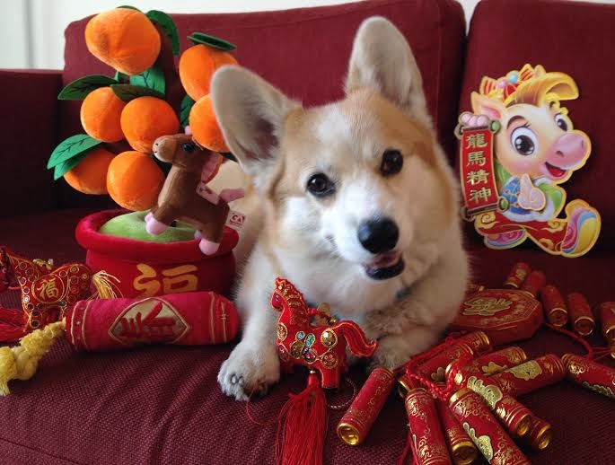Just a bunch of pictures of very good doggos celebrating the Year of the Dog