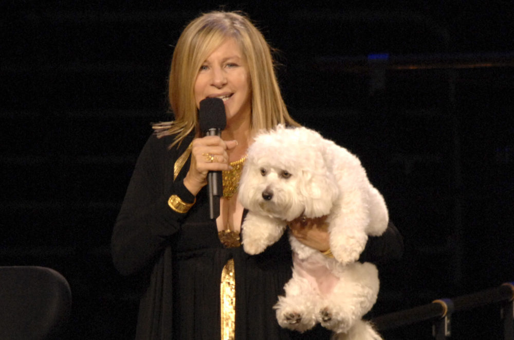Barbra Streisand cloned her dead dog twice, then could not tell the two good dogs apart