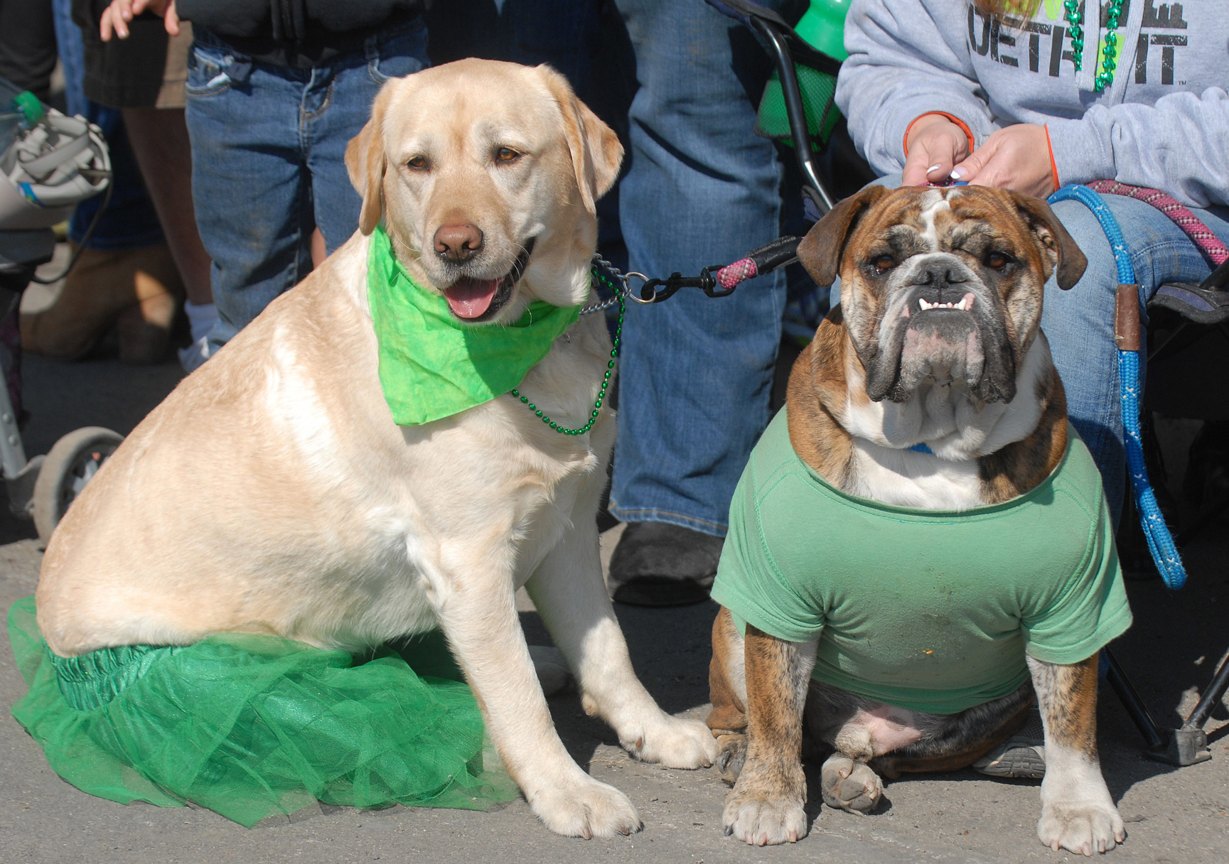 What was the original color associated with St. Patrick's Day? The answer might surprise you