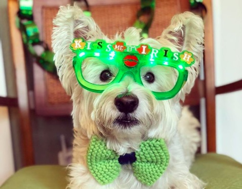 Just a bunch of very good dogs celebrating St. Pawtrick's Day