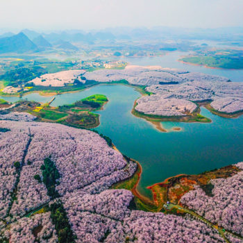 The internet is obsessed with these photos of the cherry blossoms blooming in China right now