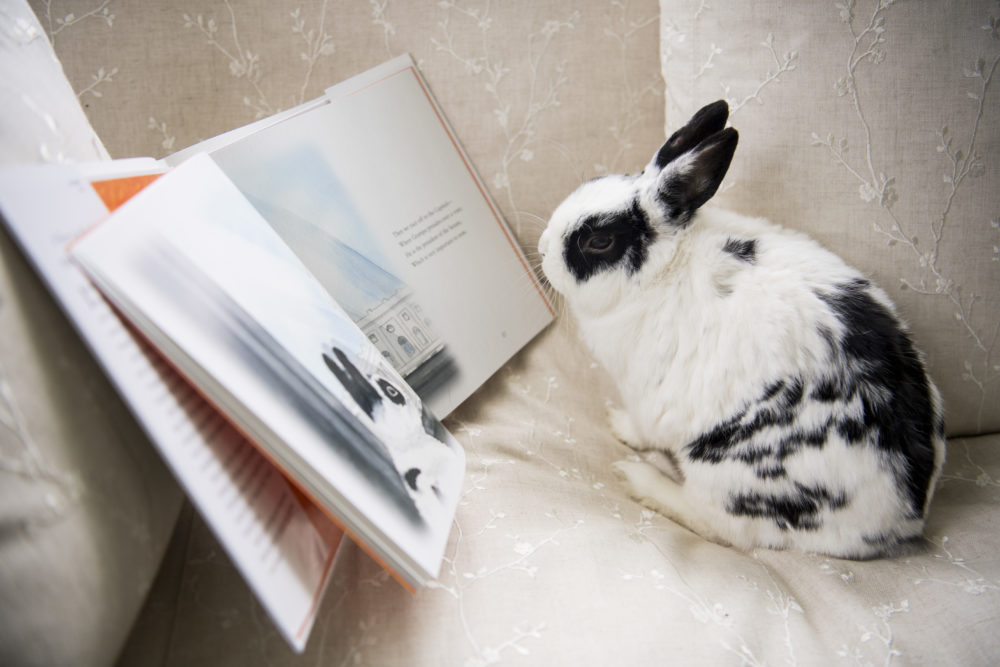 Marlon Bundo really likes John Oliver's gay bunny book about him