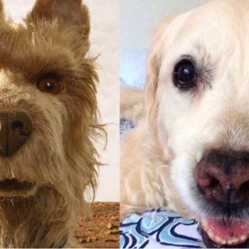 """A tribute to my very good golden retriever, after watching """"Isle of Dogs"""""""