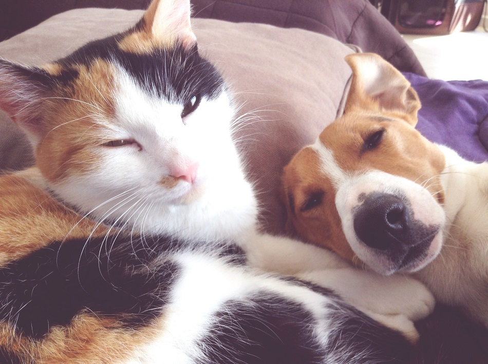 10 National Pet Day quotes that'll make you LOL, then hug your pet