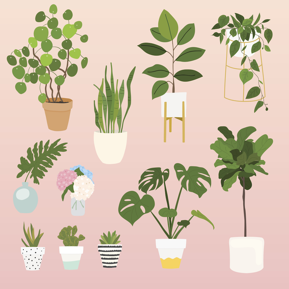 Indoor Apartment Plants: 12 Of The Best Plants For Apartments, The Best Indoor