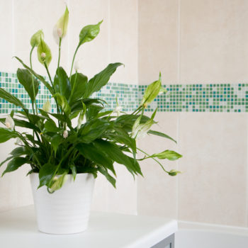 The best air cleaning plants that will have you breathing easy at home