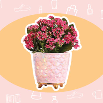 WANT/NEED: A mermaid plant perfect for Mother's Day, and more stuff you want to buy