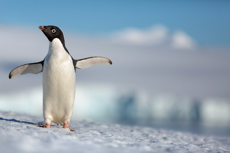 The first trailer for Disneynature's <em>Penguins</em> is absolutely adorable AF