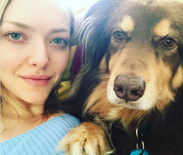 16 celebrities who adopted a shelter pet (or two)