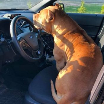 """This police officer answered a call expecting to find a """"vicious"""" pit bull, but what he got were some adorable dog pics"""