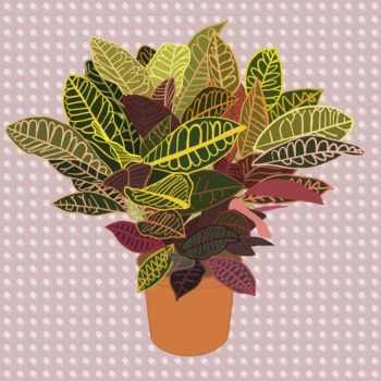 The 9 best plants to add to your house for summer