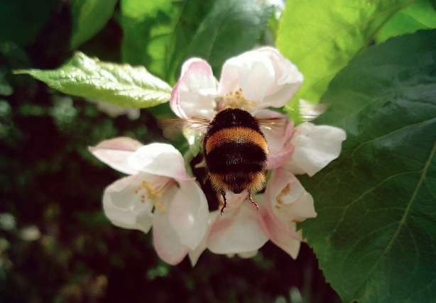 The internet is officially obsessed with pictures of bumblebee butts