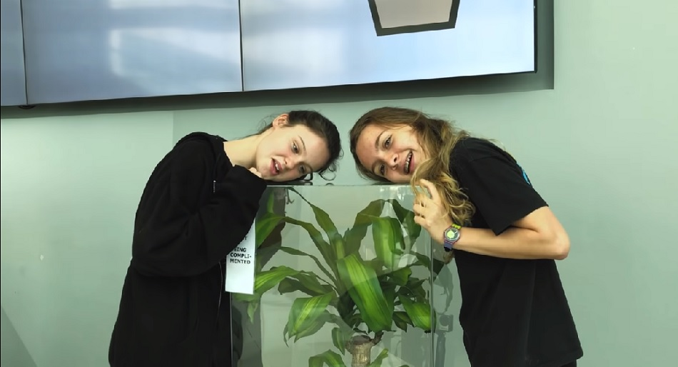 Ikea asked students to bully one plant and compliment another, and the results will floor you