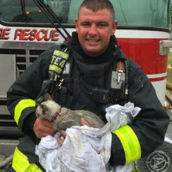 This video of a firefighter rescuing a kitten will restore your faith in humanity