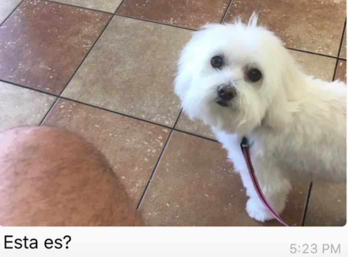 Dad picks up wrong dog from groomer, impostor dog seems very happy with the arrangement