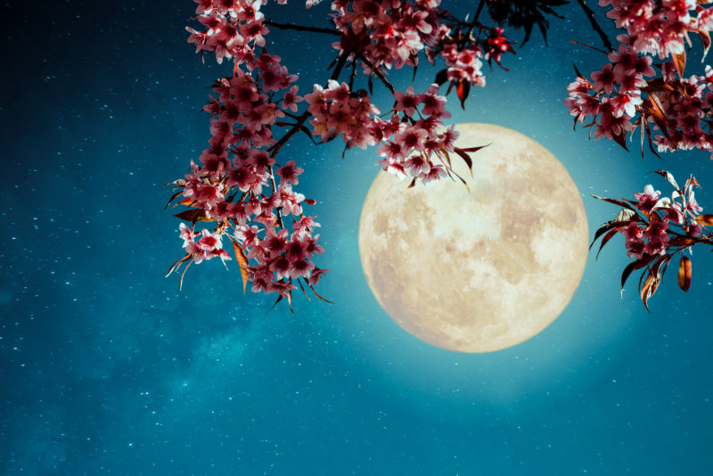 These Flower Moon rituals will help you unleash your inner spring goddess