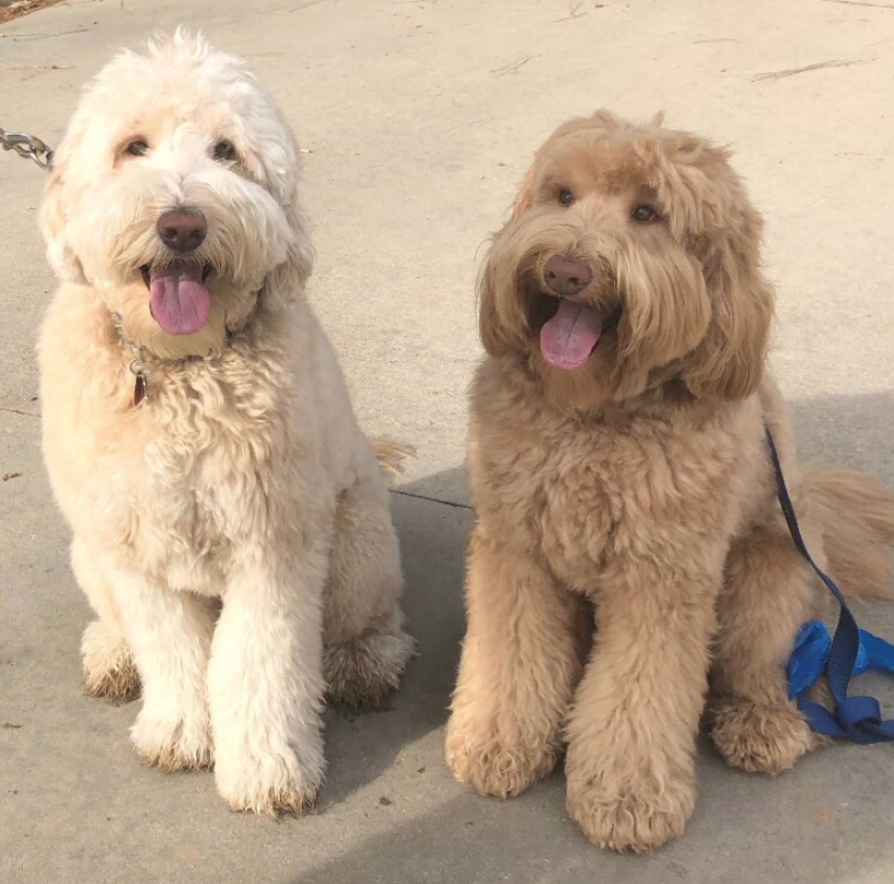 A dog reunited with his long lost brother after sniffing him out at a dog park, and OMG