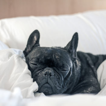 7 hotels where your dog will get better treatment than you